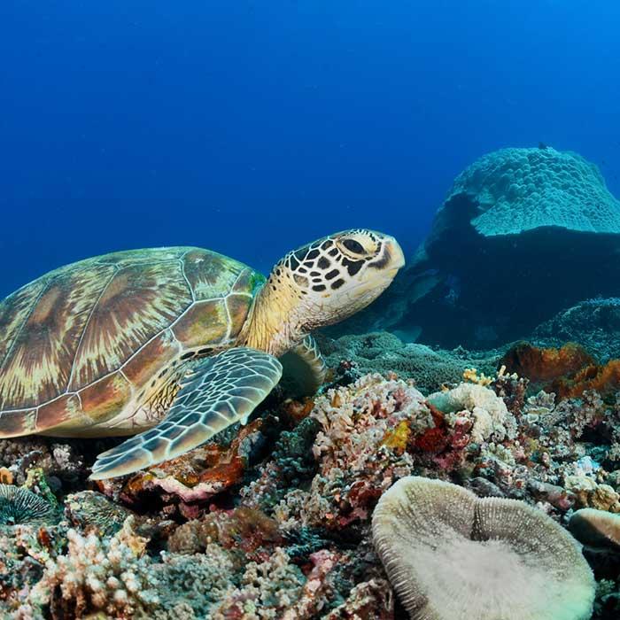 dream-dolphin-tortue-mauritius