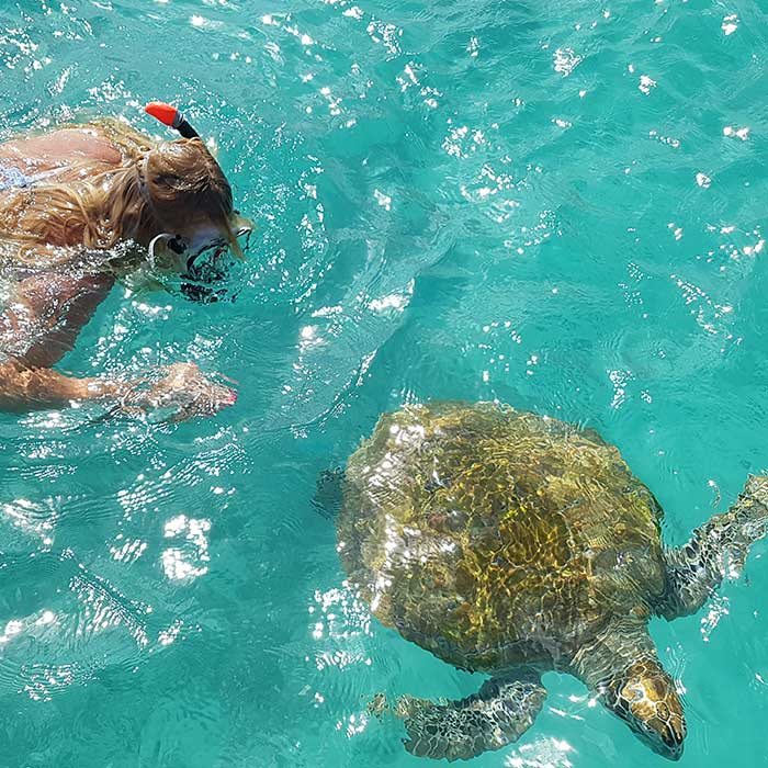 dream-dolphin-tortue-nager-mauritius